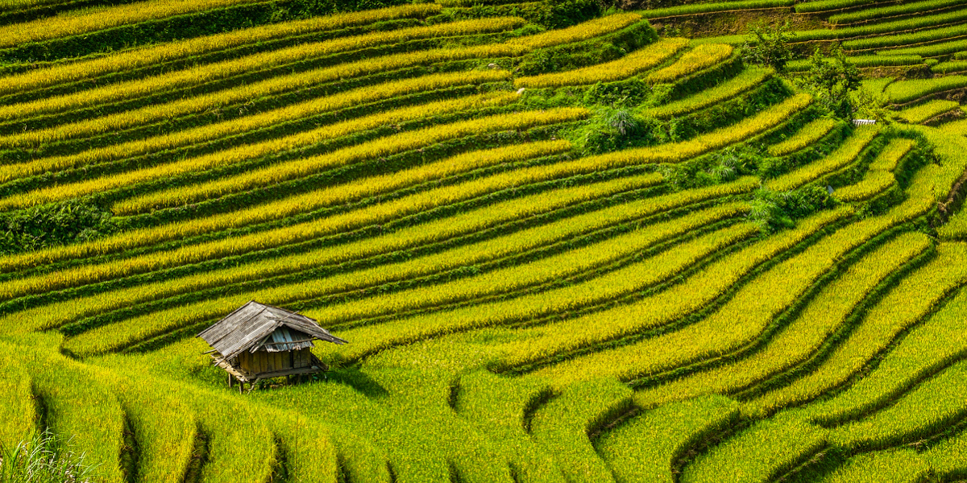 Wietnam