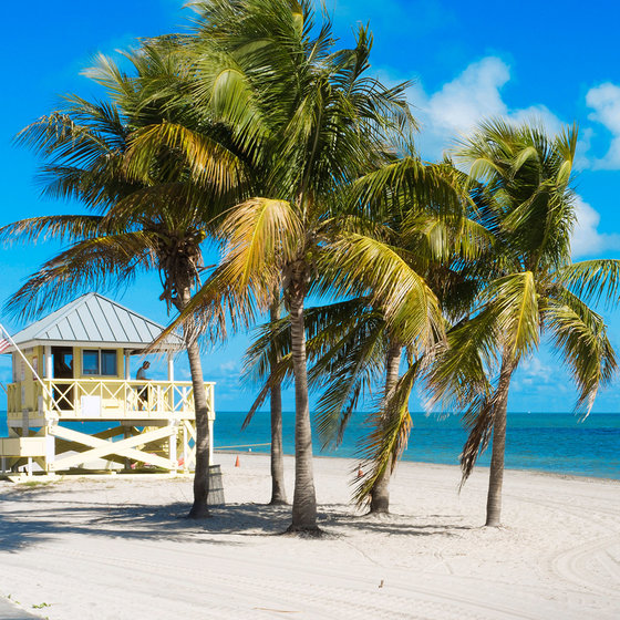 Speed Dating obszar Zatoki Tampa