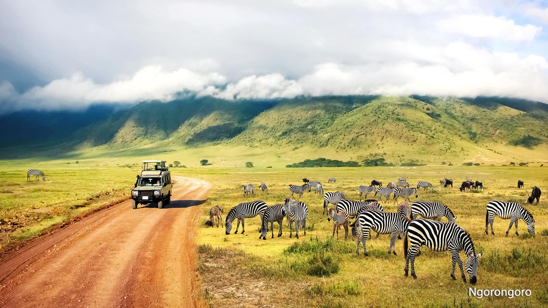 Safaris rojuje
